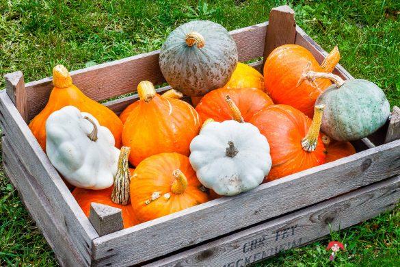Kürbis-Vollkornkuchen mit Nusskrokant und saure-Zimt-Sahne | amerikanischer Pumpkin-Pie | cremig und einfach lecker