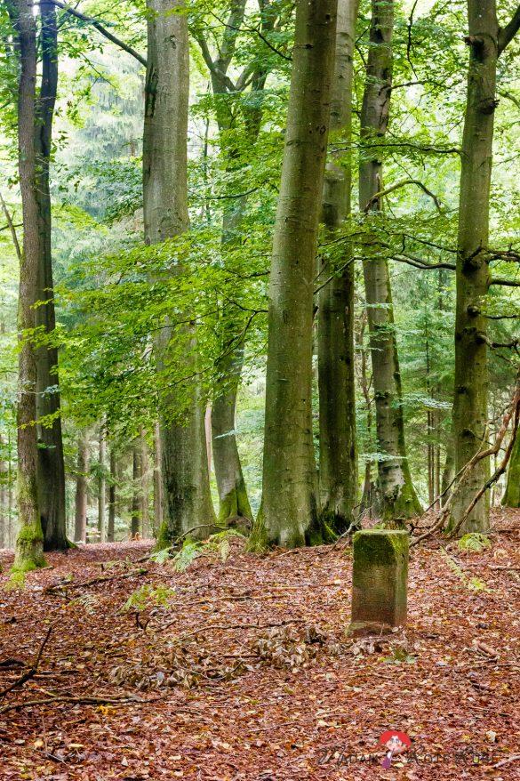 Rucksackschmaus III | Apfel-Hafersalat mit Sauerkirschen & Haselnüssen | Auf dem Offizierspfad Imsbach in Theley im Saarwanderland