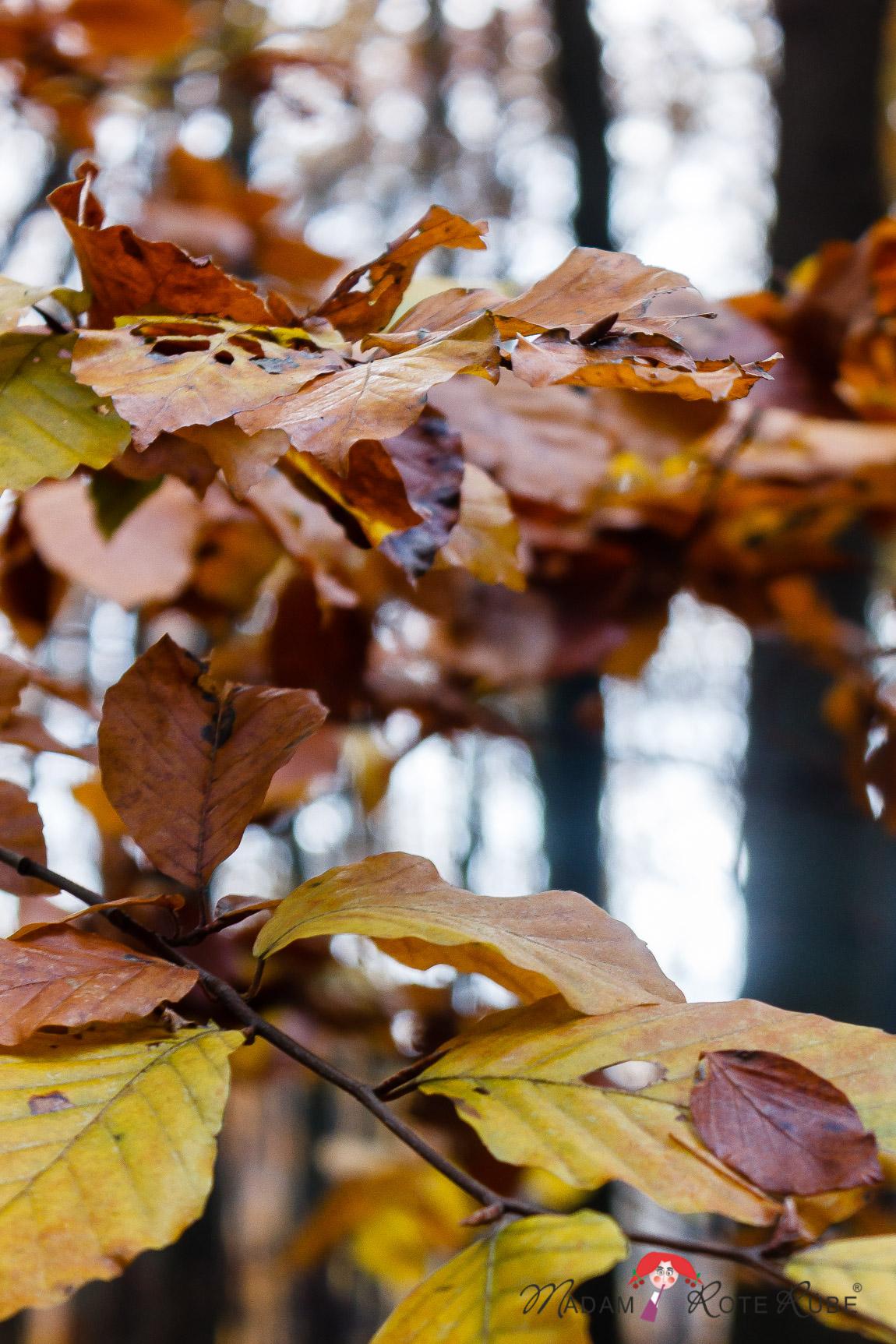 Madam Rote Rübe - Herbstblätter