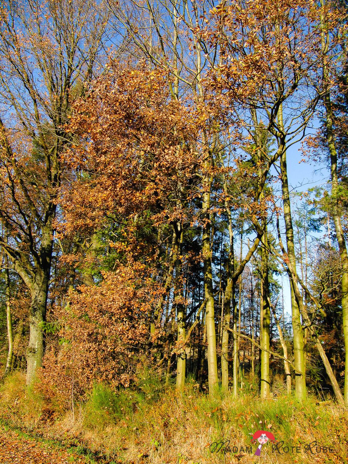 Madam Rote Rübe - Wandern im November bei Altenkirchen/Pfalz