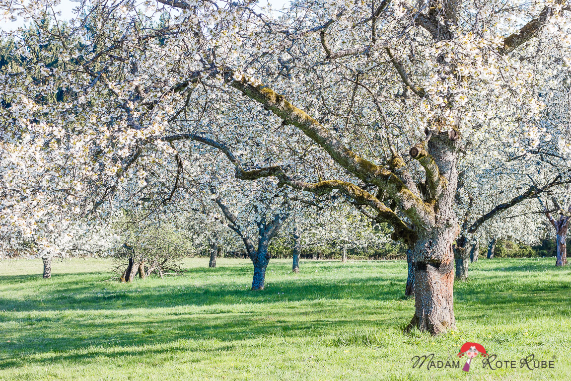Madam Rote Rübe - Rucksackschmaus V: Sagenhafte Möhren-Cracker und zur Kirschblüte ins Kirschenland