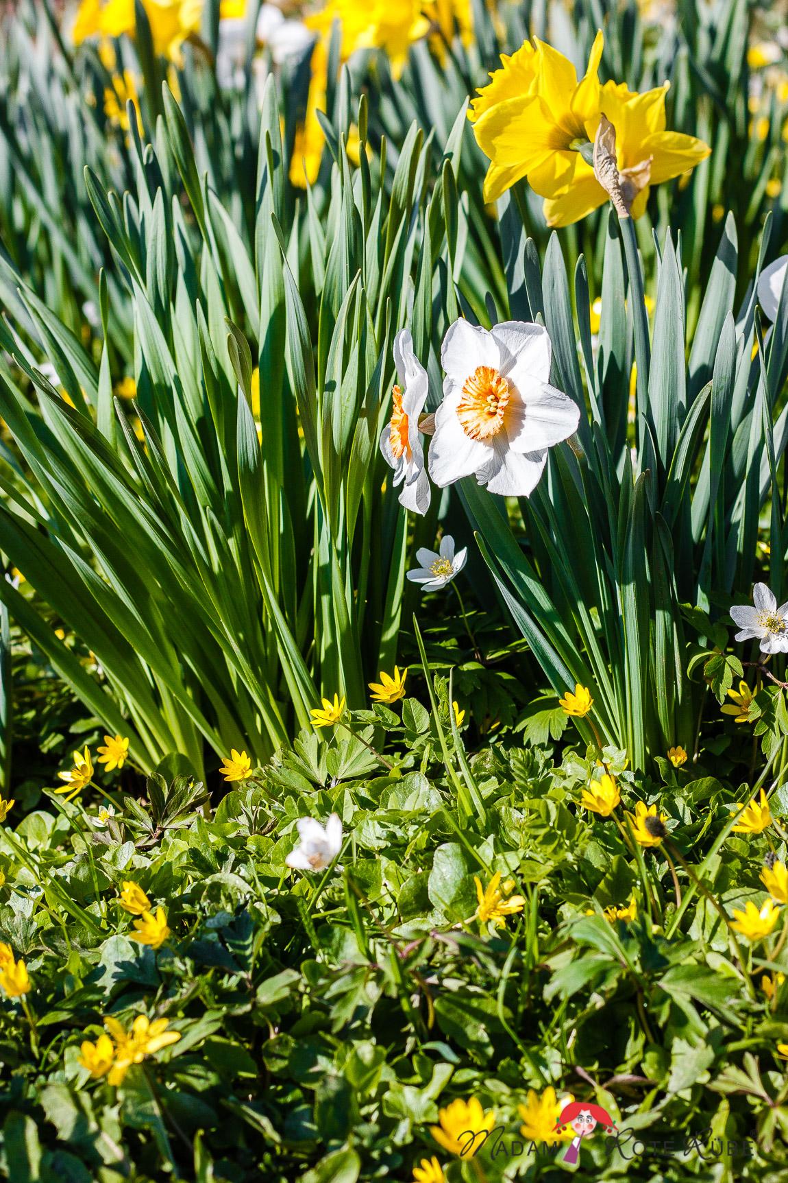 Madam Rote Rübe - Rucksackschmaus V: Sagenhafte Möhren-Cracker und zur Kirschblüte ins Kirschenlande im Kohlbachtal