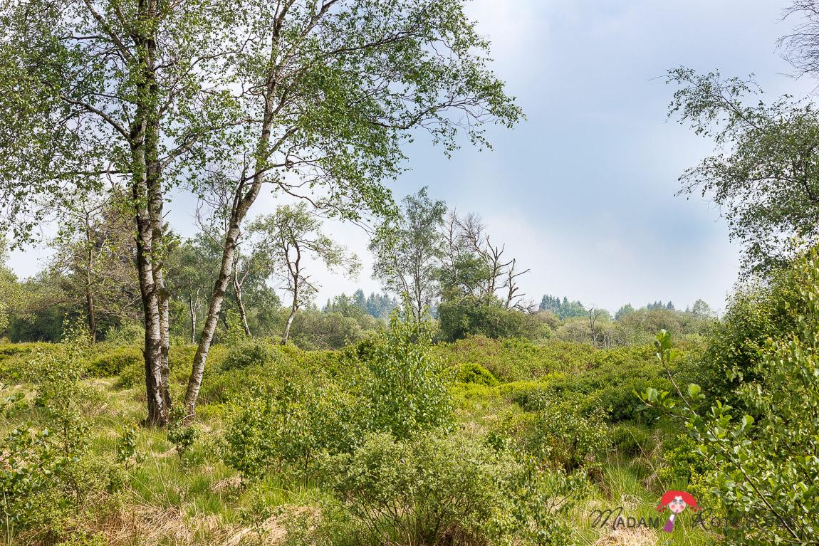 Madam Rote Rübe - Rucksackschmaus VII: Pizza-Cracker und eine Wanderung im Hohen Venn in der Eifel