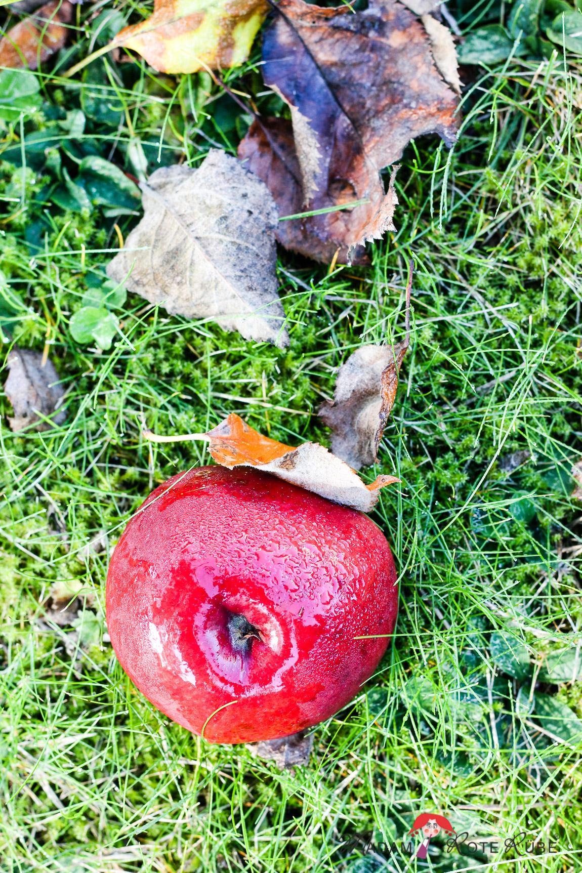 Madam Rote Rübe - Apfelernte