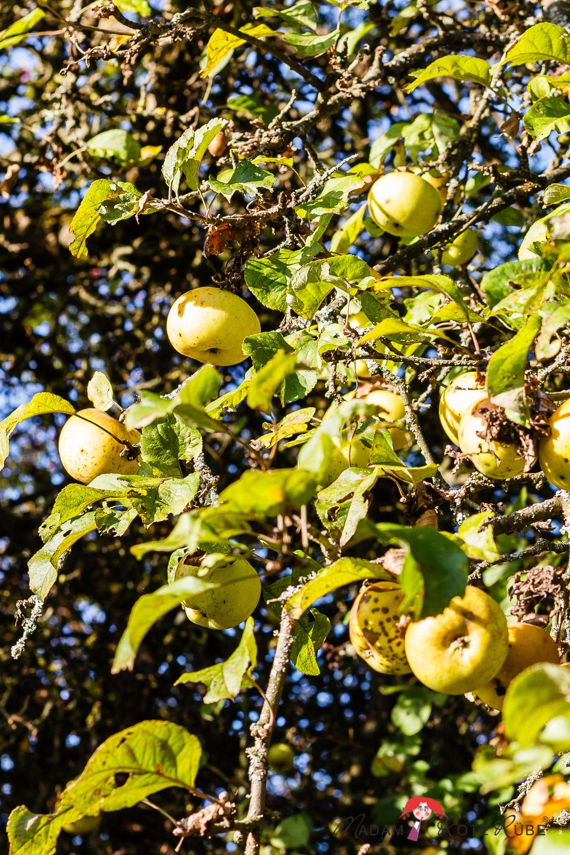 Madam Rote Rübe - Apfelplätzchen aus dem Ofen
