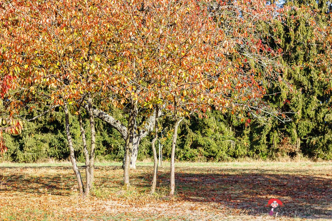 Madam Rote Rübe - Goldener Oktober
