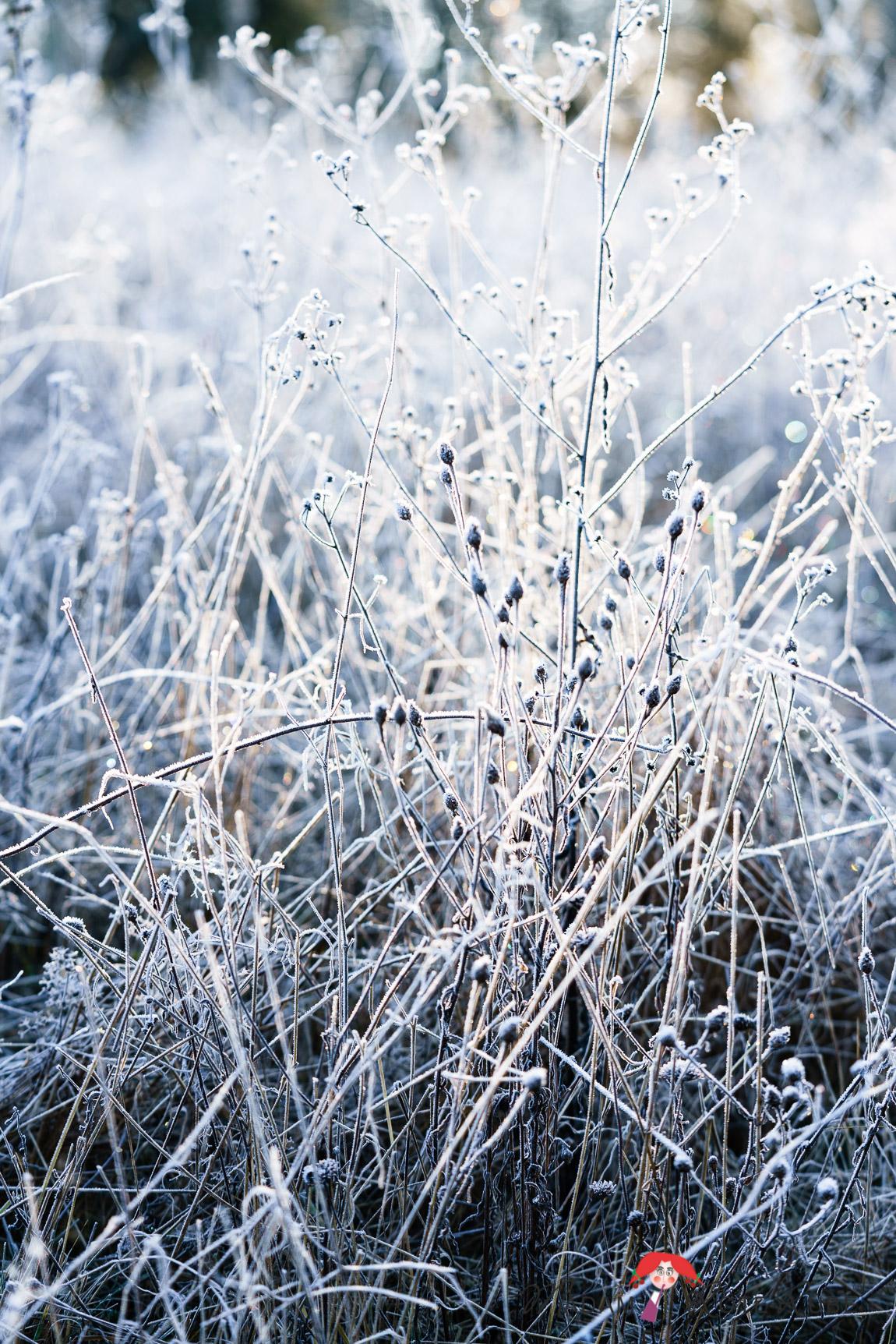 Madam Rote Rübe - Winter-Impressionen